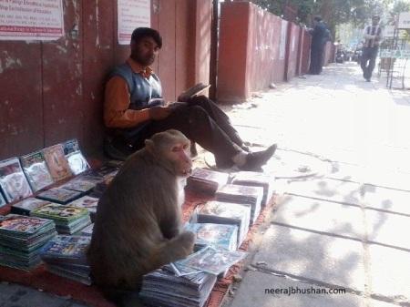 Delhi Monkey Menace. Photo By Neeraj Bhushan ©