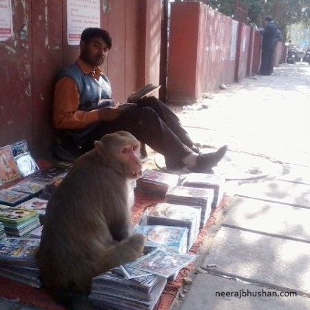 Delhi Monkey Menace. Photo By Neeraj Bhushan ©
